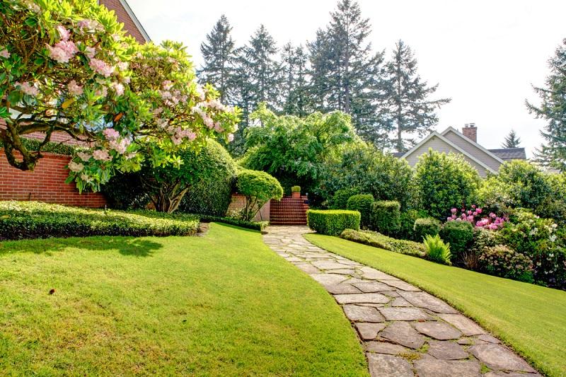 Декоративные кустарники в саду